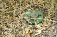 В Днепропетровской области поисковики во время работ нашли старые мины