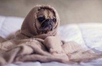 На выходных в Днепре похолодает, ночами ожидаются заморозки