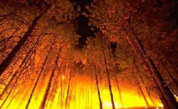 Пожар в Новомосковском лесхозе: огонь подобрался к военной части