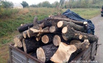 На Днепропетровщине задержан молодой мужчина за незаконную вырубку леса