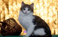 Онлайн-база потерянных животных в Днепре: 2 собаки и кот ищут хозяев(ФОТО)