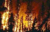 МЧС ликвидировало пожар в Новомосковском лесхозе