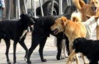 Спасатели рассказали, как избежать нападения агрессивной собаки
