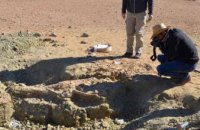 В Китае нашли останки крокодилов возрастом более 3 тыс лет