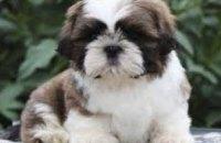 В Днепре спасли 3-месячного породистого щенка, проглотившего сережку (ВИДЕО)