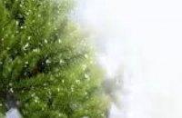 В Днепропетровской области в текущем году продали около 25 тыс елок