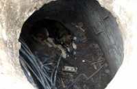 В Днепре спасли собаку, которая упала в люк
