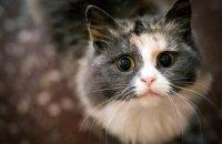 В Днепре спасли кошку, которую случайно «постирали» в стиральной машинке