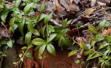 Из-за аномально теплой зимы в Крыму расцвели цветы
