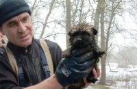 В Днепропетровской области щенок упал в канализационную трубу