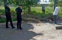 В Черкассах на детей во время экскурсии свалилось дерево