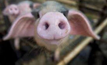 Возможность распространения африканской чумы свиней по Днепропетровщине сохраняется, - Андрей Кондратьев