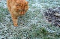 В Днепре из-за заморозков объявили штормовое предупреждение