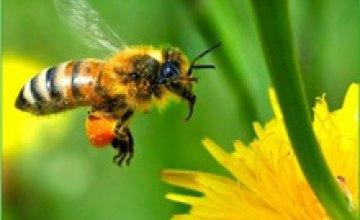 Пчелы способны распознавать человеческие лица, - ученые