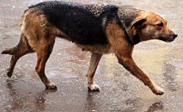 В Днепропетровске запретят отстрел животных