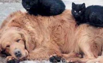 ВР предлагает за жестокое обращение с животными штрафовать украинцев на 340 грн