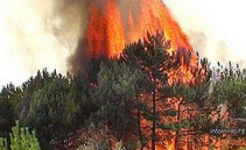 Днепропетровские и запорожские МЧСники ликвидировали лесной пожар