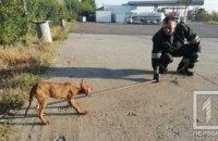 В Кривом Роге спасли собаку, угодившую в глубокую яму