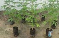 В Мелитополе полиция ликвидировала производство по выращиванию конопли