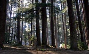 В днепропетровских лесах ведется видеонаблюдение