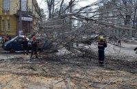 В Николаеве дерево упало на микроавтобус (ФОТО)