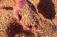 В Днепропетровской области зафиксированы два факта незаконной продажи крупных партий зерна