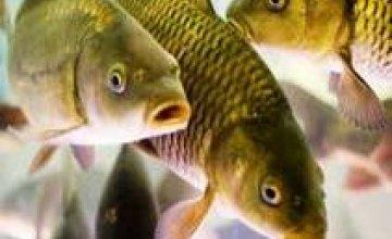В Крыму ввели запрет на вылов рыбы