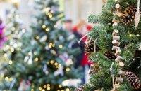 7 декабря в Днепре стартует продажа живых елок