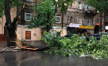 Коммунальщики наводят порядок в Днепропетровске после вчерашнего урагана