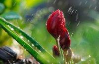 Погода в Днепре 12 апреля: тепло, возможен дождь