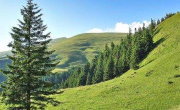 Рада запретила использование капканов и усилила борьбу с браконьерством