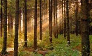 «Днепродзержинский лесхоз» проводит профилактику лесных пожаров