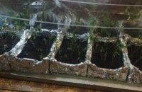 На Днепропетровщине полицейские разоблачили мужчину, который в арендованной квартире вырастил коноплю (ФОТО)