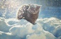На Днепропетровщине метеорологическая зима началась только 9 января, - синоптики
