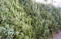 В Днепре подорожали новогодние елки