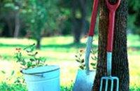 За год в Днепропетровске посадили 80 новых деревьев