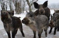 Как зимуют животные в заповеднике Павлоградского химзавода