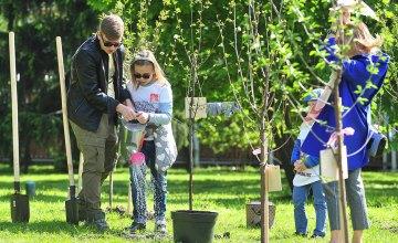 Дніпро-квітучий: на житлових масивах Покровський та Червоний камінь висадили 70 молодих дерев
