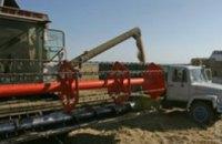 В текущем году Украина может собрать рекордный урожай зерновых за годы независимости
