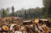На Днепропетровщине трое мужчин занимались незаконной вырубкой леса