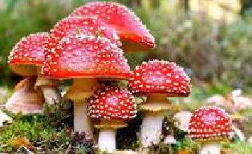 Как распознать отравление грибами (ПРИЗНАКИ)