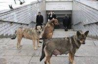 В Мексике открыли приют для забытых в метро животных