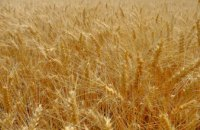 В 15 районах Днепропетровщины началась жатва