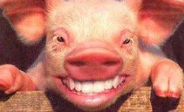 В Луганской области сняли карантин по африканской чуме свиней