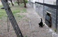 В Днепре спасли кота, который не мог самостоятельно слезть с дерева