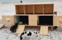 В Одессе волонтеры установили на пляже домики для бездомных котов (ФОТО)