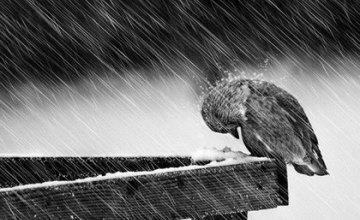 Жителей Днепропетровщины предупреждают об опасных метеоявлениях