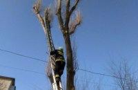 В Днепре кот не мог спуститься с дерева: на помощь пришли спасатели