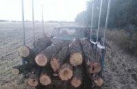 В Юрьевском районе полицейские обнаружили двух мужчин, которые занимались незаконной вырубкой деревьев