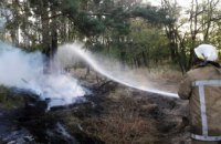 На Днепропетровщине горело 2 хвойных леса
